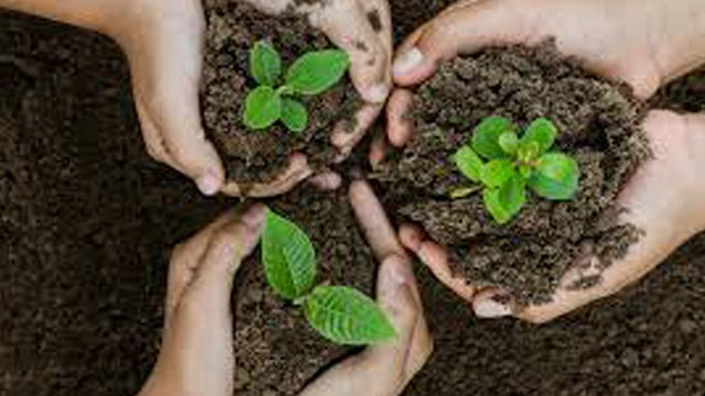 Unique online service to plant trees