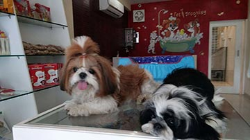 A Renowned Pet Grooming Salon & Store Franchise for Sale