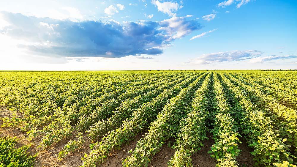 Agriculture & farming