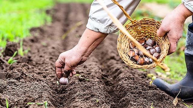 Agri Startup needs Investors